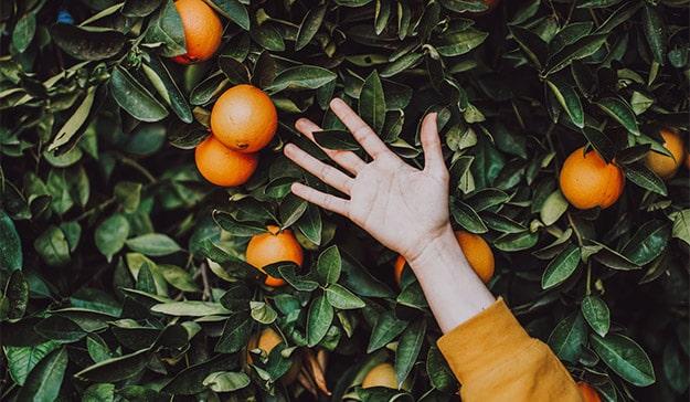 influencer marketing naranjas mano