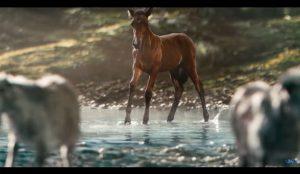 Cabras, un caballo y naturaleza salvaje: Así presenta Ford el nuevo Bronco Sport