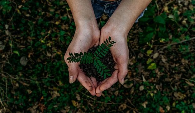 sostenibilidad y empatia