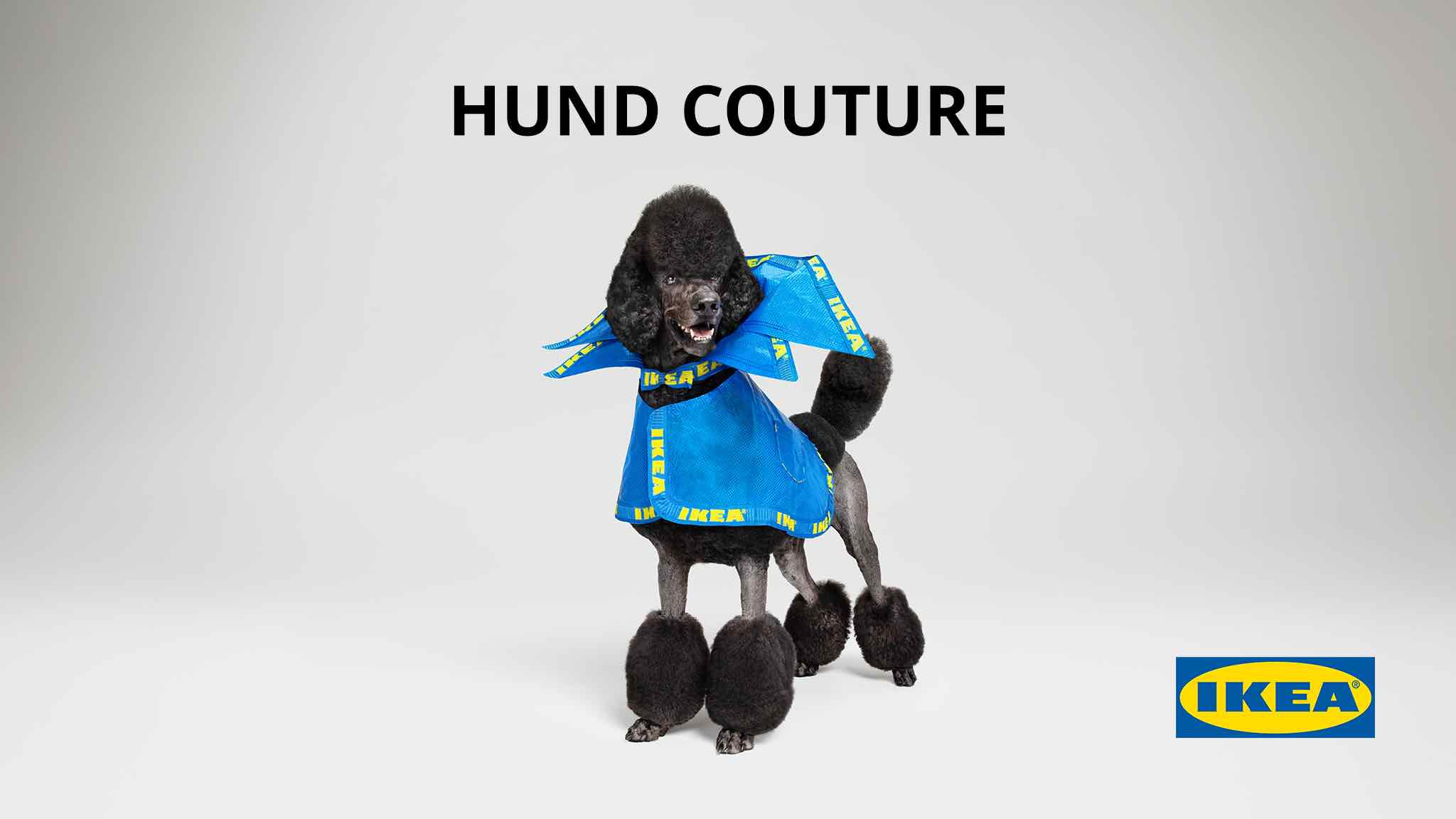IKEA Hund Couture