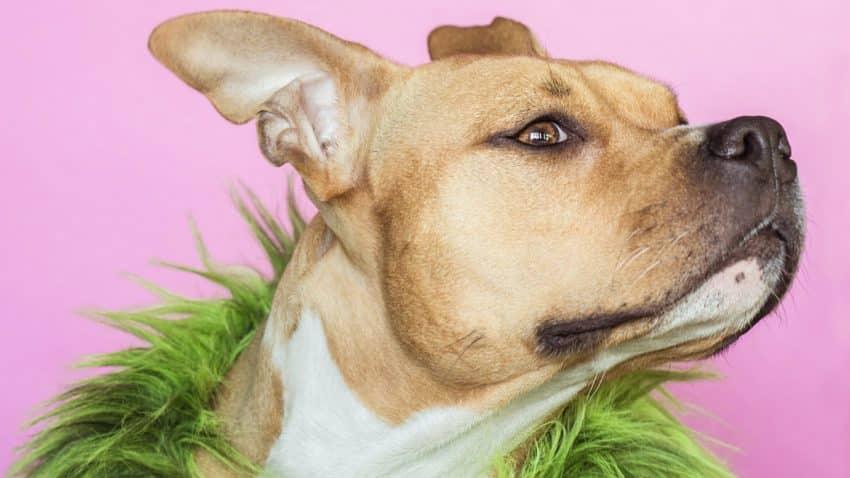 La igualadísima lucha a cara de perro entre TikTok y Snapchat por el corazón de los adolescentes