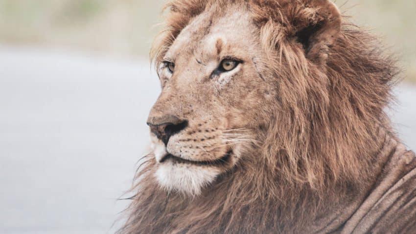 Así ha vivido el sector de la publicidad Cannes Lions 2021: Hablamos con ganadores y jurados