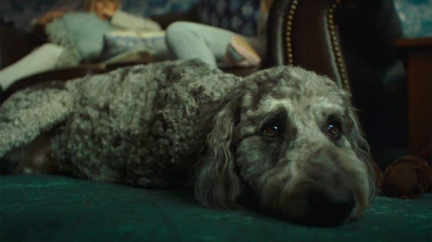 Este tierno spot explora la bendita (y maloliente) locura de tener mascotas en casa