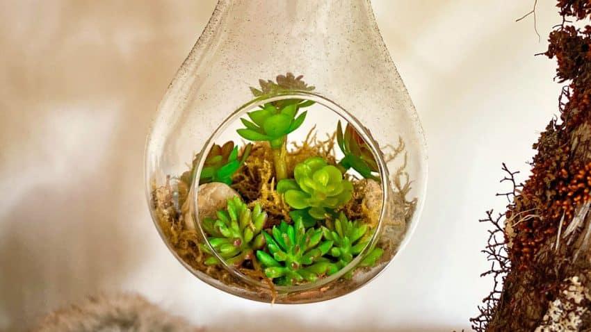 La sostenibilidad, la semilla que crece entre la Generación Z y que hay que cultivar