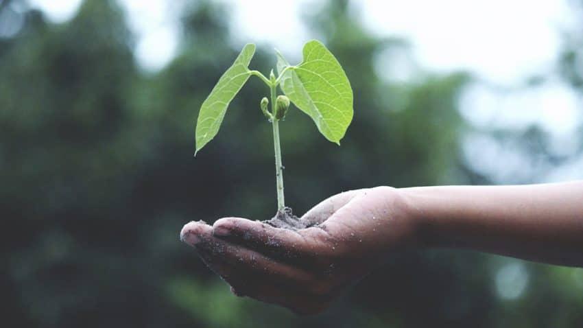 5 claves para hacer germinar la semilla de la sostenibilidad en las empresas