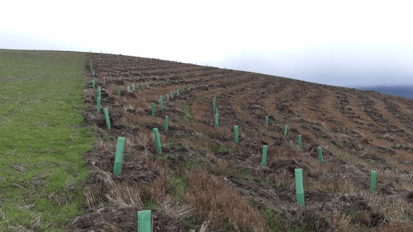 P&G planta 10.000 árboles en las zonas afectadas por los incendios de Castilla y León