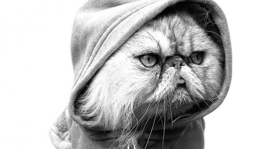 Perros y gatos con estilosos