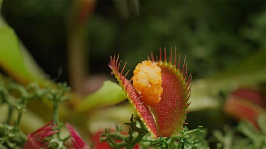 En este voraz spot una planta carnívora se hace caníbal tras zamparse unos nuggets veganos