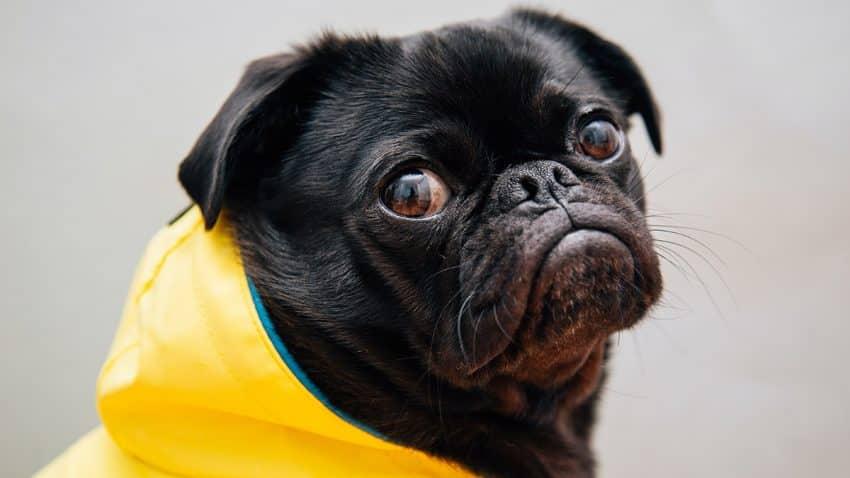 Los CMOs y su penosa batalla a cara de perro para demostrar el valor del marketing ante los CEOs