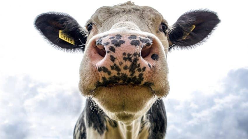 ¿El último grito alimentario? Esta startup ordeña leche