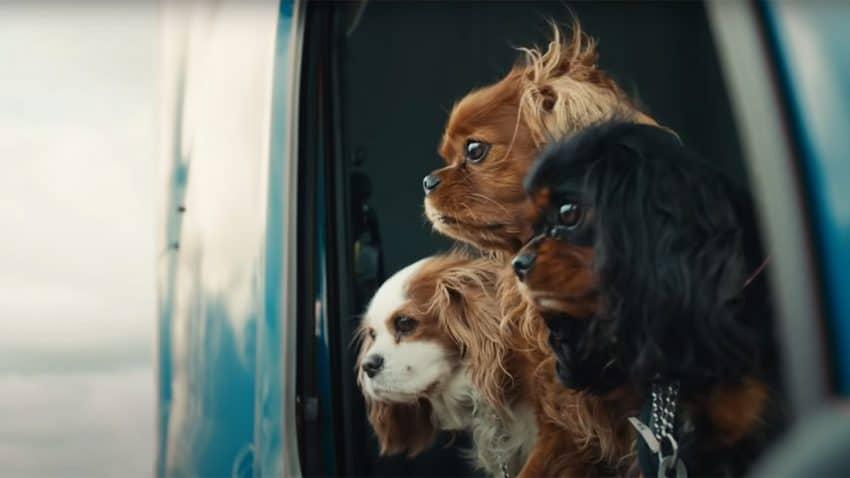 Los perros de este spot de Volvo te harán ladrar de gusto (y también morirte de la envidia)