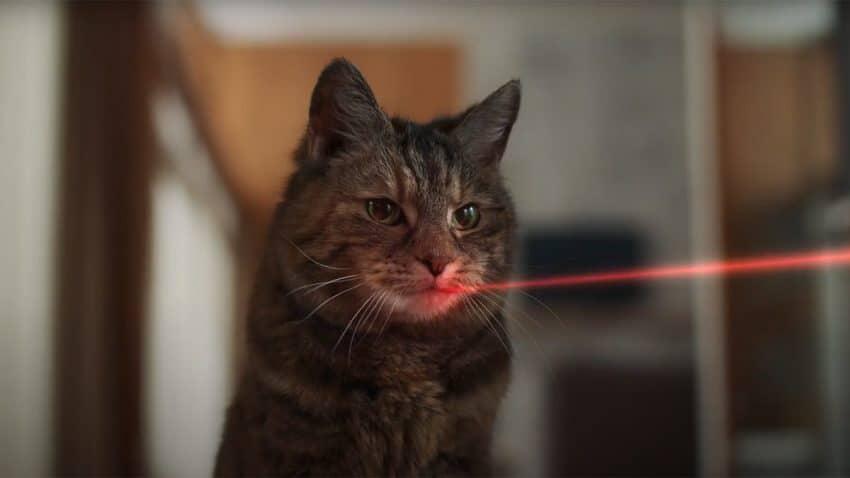 Un gato logra la increíble proeza de cazar un puntero láser en este gracioso spot